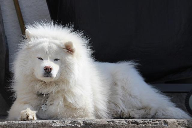 dog-1256219_640