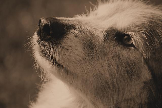 dog-1357425_640