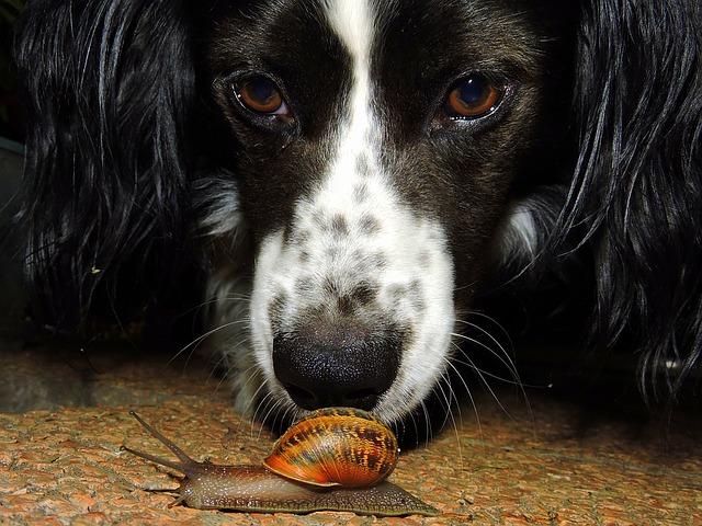dog-1492672_640