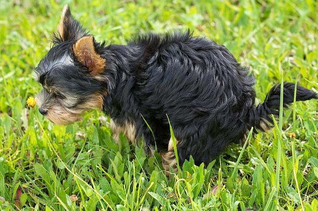 dog-1543294_640