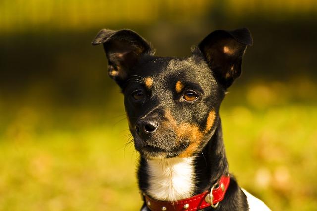 dog-1549690_640