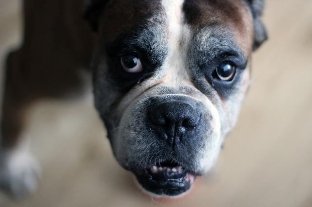 dog-1590377_640