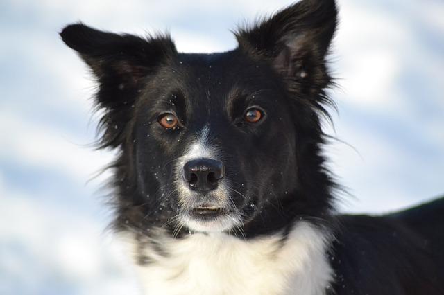dog-1604113_640