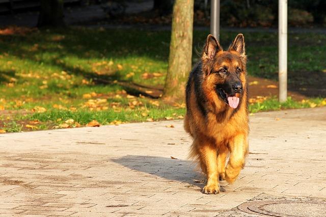 dog-1726931_640