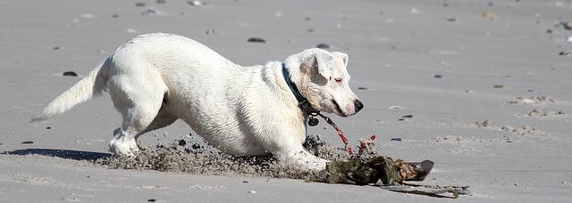 dog-1734908_640