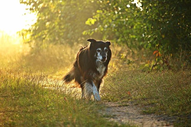 dog-1748202_640