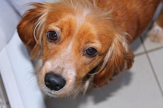 dog-674605_640