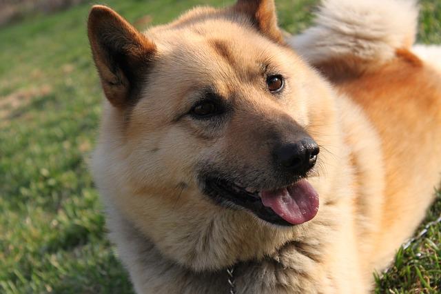 dog-692864_640