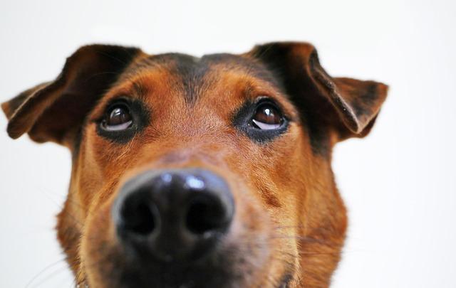 dog-838240_640