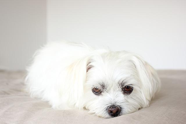 puppy-1547176_640