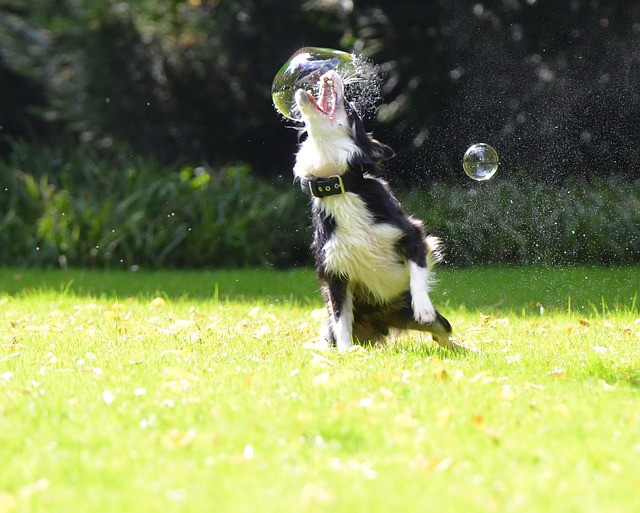soap-bubbles-672659_640