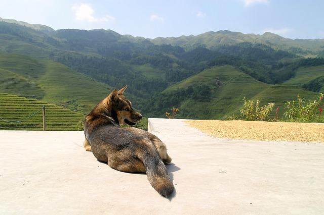dog-1028155_640