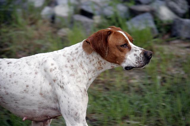 dog-1320126_640