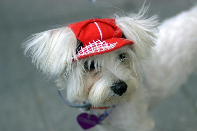 dog-1384571_640