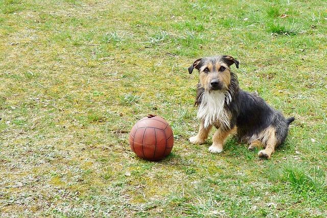 doggy-1309115_640