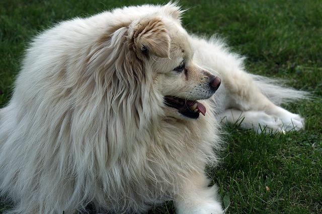 doggy-1468353_640