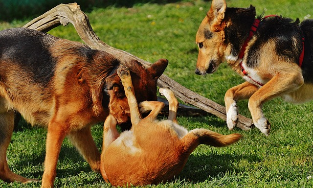 dogs-1615940_640
