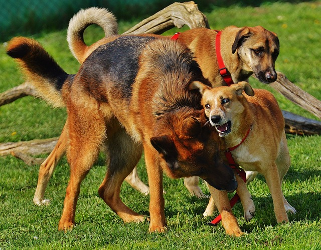 dogs-1615943_640