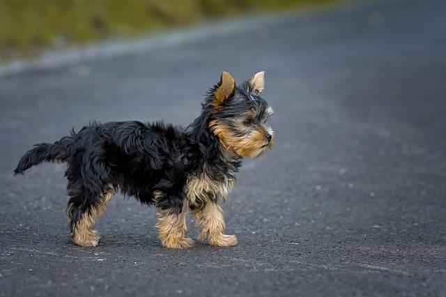 dog-1543352_640