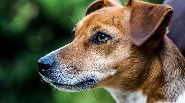 dog-1961356_640