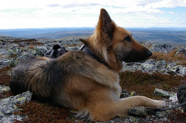 dog-727820_640