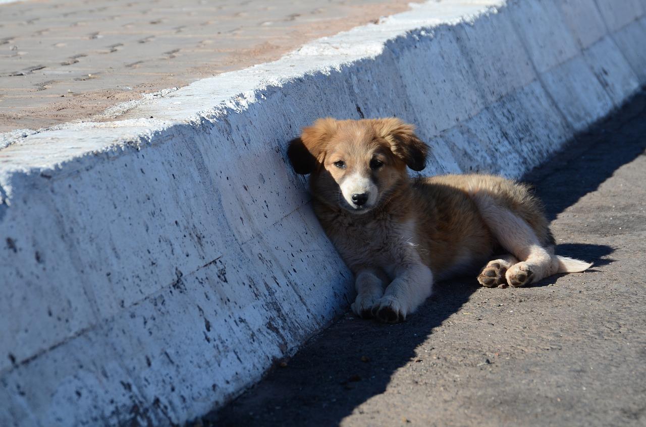 puppy-1944397_1280