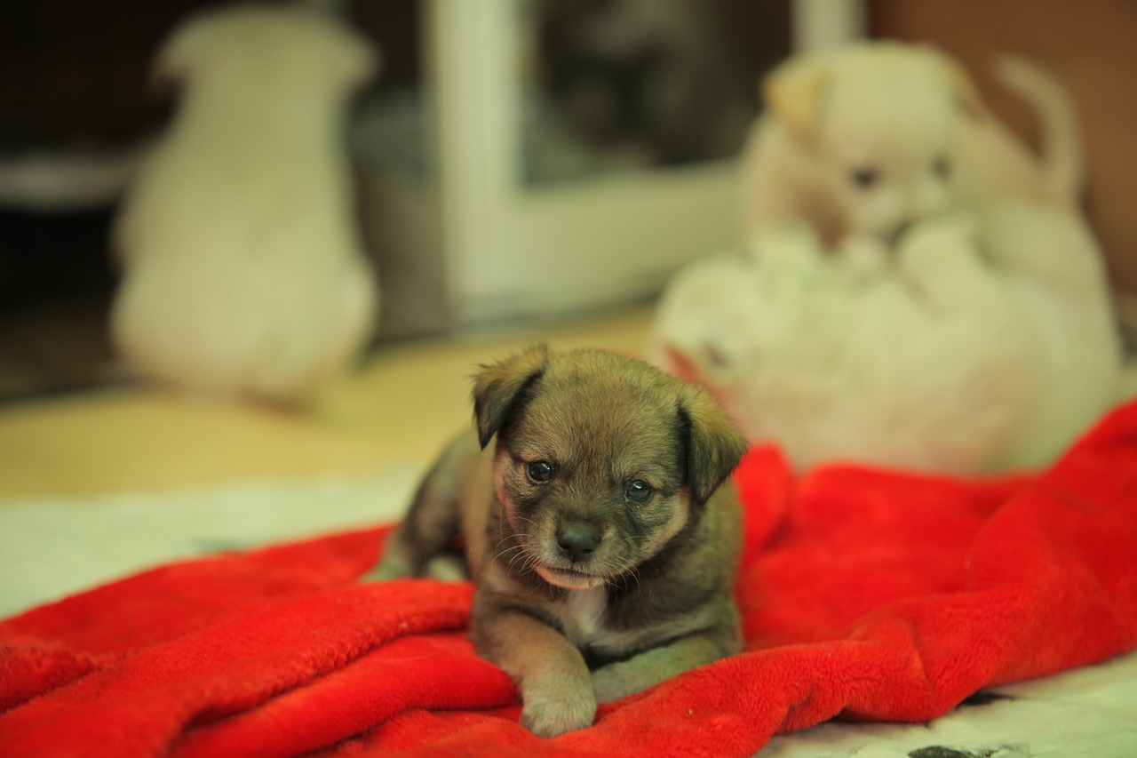 stray-dog-1153229_1280