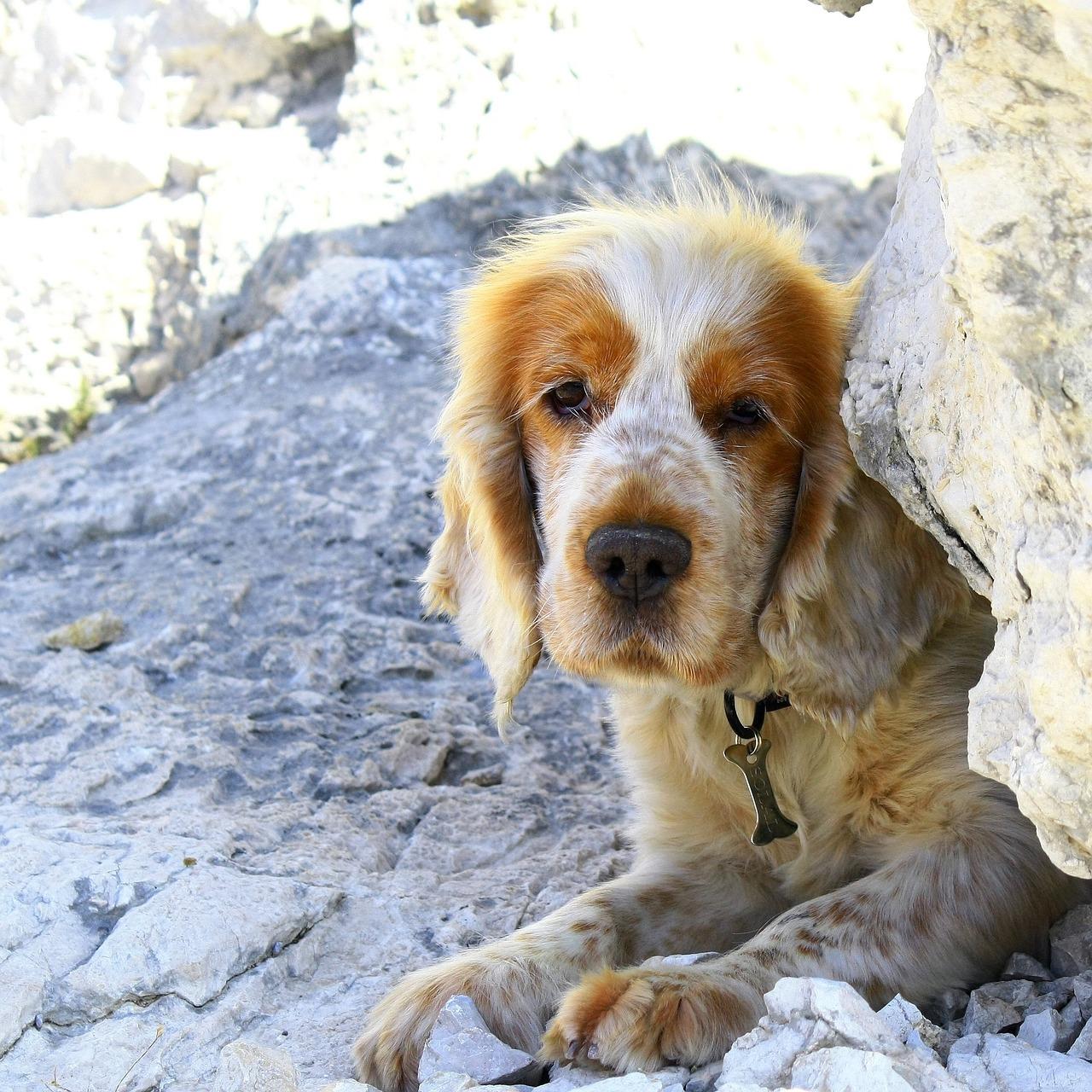 dog-1072215_1280